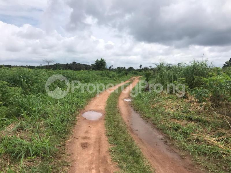 Residential Land for sale Igboonla Epe Epe Lagos - 2