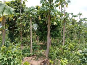 Land for sale Aderounmun Village, Alako, off Eruwa Road, Ido-Local Government,  Ibadan Oyo
