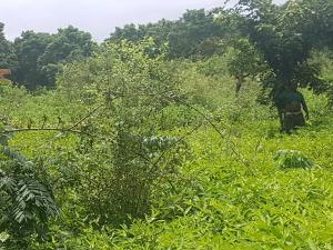 Commercial Land Land for sale Iseyin, Oyo State Iseyin Oyo