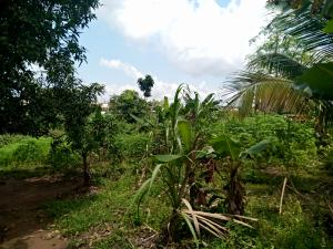Land for sale 100 by 100 land for sale at  Oko community, Airport Road very close to Ogba zoo going for  #8m.  Oredo Edo