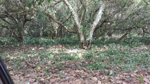 Commercial Land Land for sale Oke Odan Yewa South Yewa Ogun