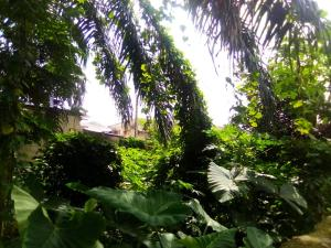Residential Land Land for sale BASSEY ESAU STREET, ITIAM Uyo Akwa Ibom