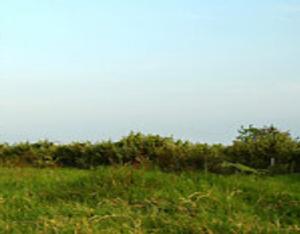 Commercial Land Land for sale Oredo Edo