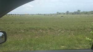 Commercial Land Land for sale Along Effurun Sapele Express, 08142958378 Warri Delta