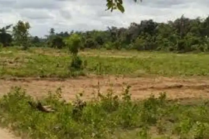 Serviced Residential Land Land for sale  Behind Grand ovation event centre moshalashi. Beside moshalashi police station Egbeda Alimosho Lagos