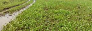 Residential Land Land for sale Umuetchem Etche Port Harcourt Rivers
