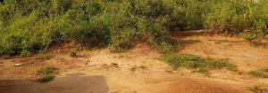 Residential Land Land for sale Back of Usteem school , Agunbelewo, Osogbo, Osun state Osogbo Osun