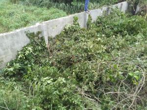 Residential Land Land for sale Abalabi, after ajegunle paapaa bus stop ilaro road. Papalanto Ewekoro Ogun