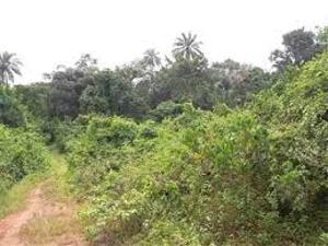 Land for sale Sabo lugbe  Lugbe Abuja