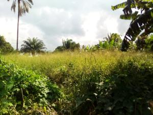 Residential Land Land for sale Champion breweries, Aka Road Uyo Akwa Ibom