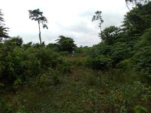 Mixed   Use Land Land for sale Ute community, ward 6 uhunmode local government area. Along auchi-Lagos road  Uhunmwonde Edo