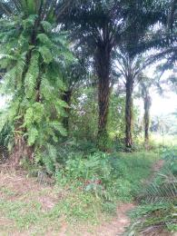Commercial Land Land for sale beside Obingwa local government headquarters Mboko Obi Nwa Abia