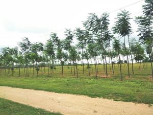 Commercial Land Land for sale iseyin village Iseyin Oyo