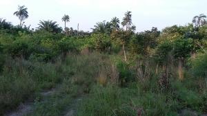 Land for rent Bogije Ajah Ibeju-Lekki Lagos