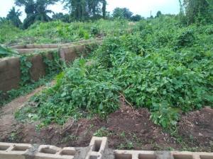 Residential Land Land for sale Laniba behind IITA Ajibode Area Ajibode Ibadan Oyo