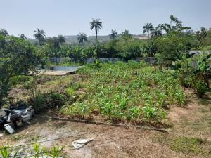 3 bedroom Residential Land for sale Ilesha Gra Ilesha West Osun