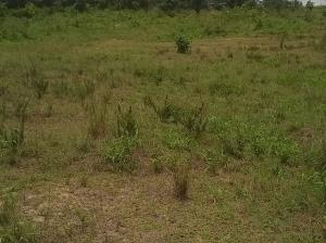 Mixed   Use Land Land for sale Ajayi Str idi- Araba Surulere Lagos