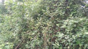 Land for sale Closed to the main road Ejioku Lagelu Oyo