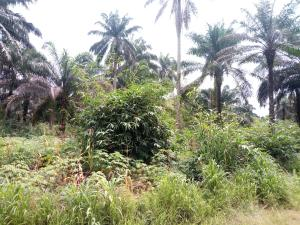 Residential Land Land for sale Afaha Efiat Iman by Gov't Primary School Afaha Efiat Iman. Etinan Akwa Ibom