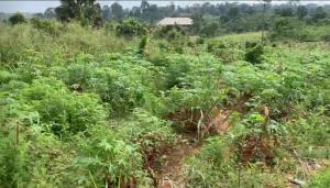 Land for sale Anambra Anambra