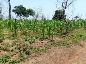 Commercial Land Land for rent Owode village ipapo town itesiwaju LG Oyo state  Itesiwaju Oyo