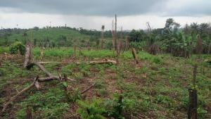 Land for sale Ife-ibadan Express Way after tollgate (Ajoda home town ) Egbeda Oyo