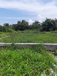 Residential Land Land for sale Alashela Sangotedo Ajah Lagos