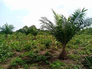 Commercial Land Land for sale ... Alabata Abeokuta Ogun