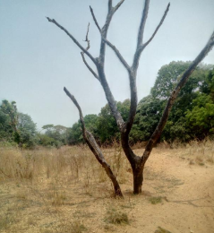 Commercial Land Land for sale - Chikun Kaduna