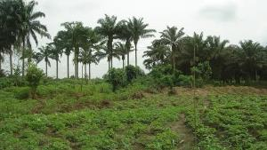 Land for sale Iseyin Oyo road 20 minutes drive from  The road Iseyin Oyo