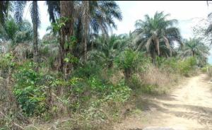 Residential Land Land for sale uyo Etinan Akwa Ibom