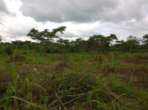 Land for sale Iseyin-Ibadan road along Serafu Iseyin Oyo