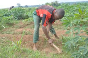 Land for sale  Behind Shina farm Iseyin Oyo express  Way, opposite Oje village, iseyin LG Iseyin Oyo