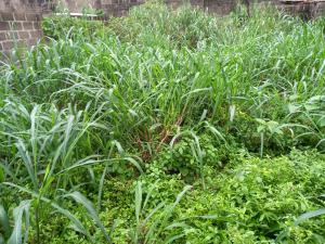 Mixed   Use Land for sale On Iju Road Opp Olowosokedile Iju Agege Lagos