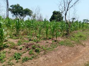 Commercial Land Land for sale  km3, off iseyin oyo road, idi iya iseyin Iseyin Oyo