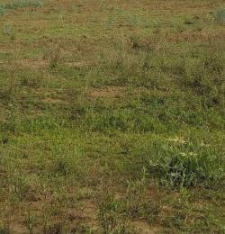 Land for sale Lekki Express Way Shoprite Ajah Ibeju-Lekki Lagos