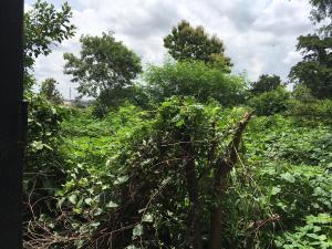 Land for sale Olayiwola street Akala way Akala Express Ibadan Oyo