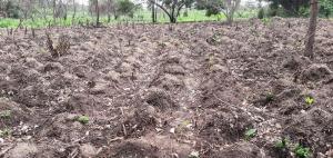 Land for sale Ibadan, Oyo, Oyo Omi Adio Ibadan Oyo