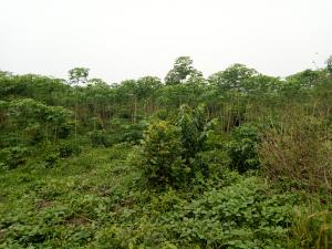 Commercial Land Land for sale sukuru village, Iyana offa off iwo road Iwo Rd Ibadan Oyo