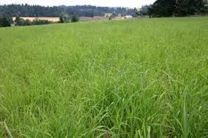 Land for sale Royal Gardens Estate, Off Off Lekki-Epe Expressway Ajah Lagos