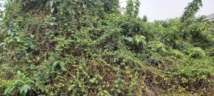 Industrial Land Land for sale Ijebu road before onigambari off new garage challenge  Challenge Ibadan Oyo