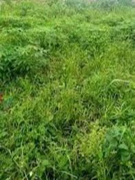 Mixed   Use Land for sale Arowojobe Estate Maryland Lagos