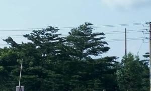 Joint   Venture Land Land for sale Off Lekki Epe Expressway, Near Muritala Muhammed Farm, Owowoko Eleranigbe Ibeju-Lekki Lagos