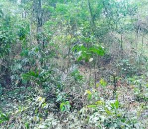 Land for sale Odogbolu, Ogun Odogbolu Ogun