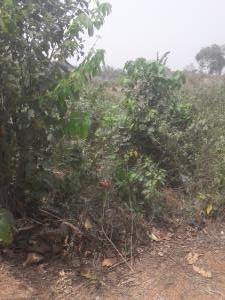 Land for sale Egan street  Igando Ikotun/Igando Lagos