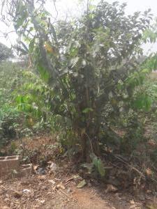 Land for sale Ikola Command Abule Egba Lagos Abule Egba Lagos