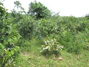 Land for rent Goriko Chikun Kaduna