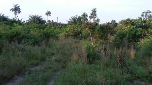 Joint   Venture Land Land for sale - Epe Road Epe Lagos