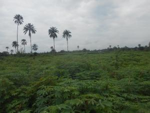 Residential Land Land for sale Jahi Abuja