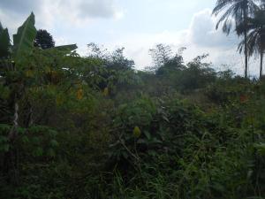 Land for sale EWET- HOUSING ESTATE, UYO Uyo Akwa Ibom